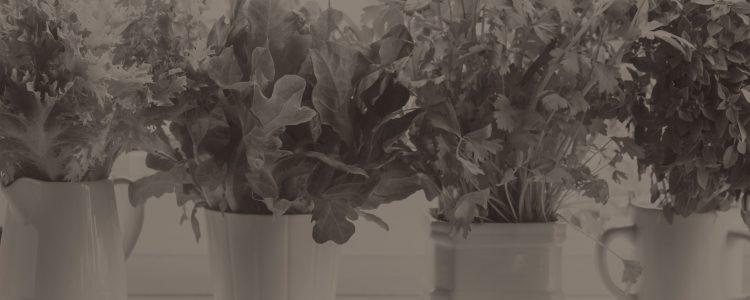 Blog Home Garden